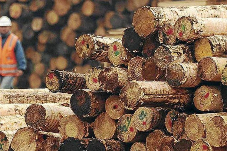 Indústria da madeira essencial contra o Coronavírus